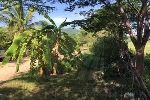 terrenos en venta en chandiablo, manzanillo