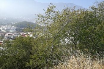 terrenos en venta en sierra alta, monterrey
