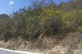 terrenos en venta en valle alto, monterrey