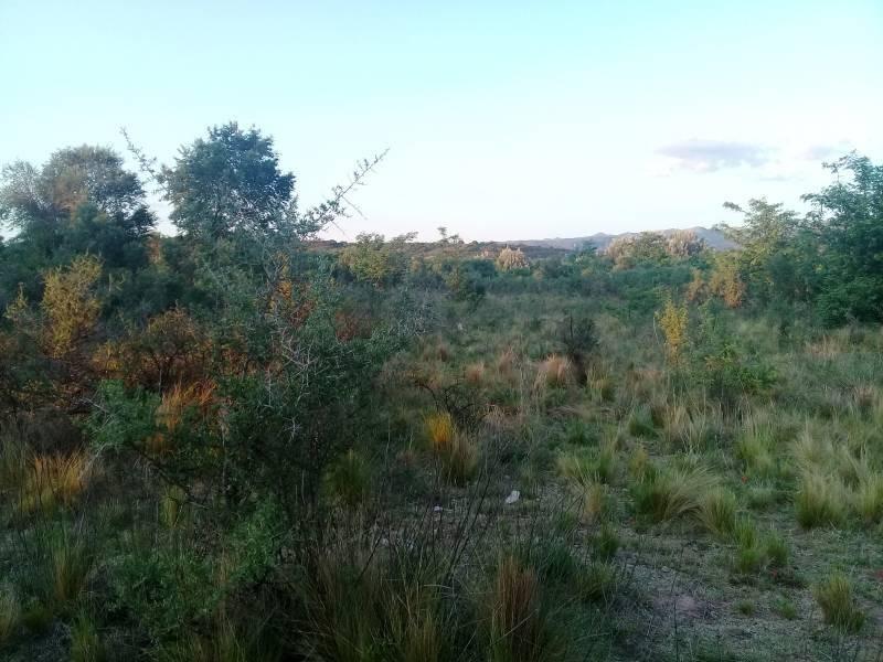 terrenos o lotes venta panaholma