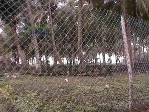 terrenos playa tuxpan veracruz. hermoso terreno de 10000 m² con 60 palmeras con cocos, ubicado frente a la playa de chile frio de tuxpan veracruz, cuenta con electricidad. #ref:3878 - 3878 - inmobil