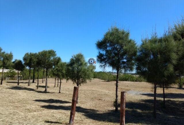 terrenos à venda 480 m2 - condomínio del mare - praia seca