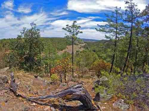 terrenos venta bosques de llano grande