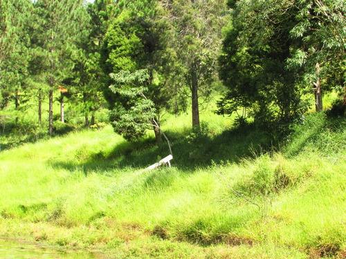 terrreno com lago, mata, bosque, nascente, ref: 04334