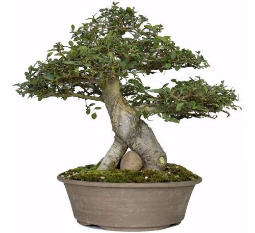 tesoura de podar planta bonsai orquídea prof. tramontina