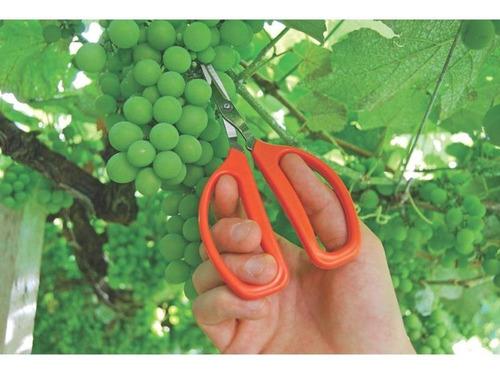 tesoura metálica profissional para frutas com cabo plástico