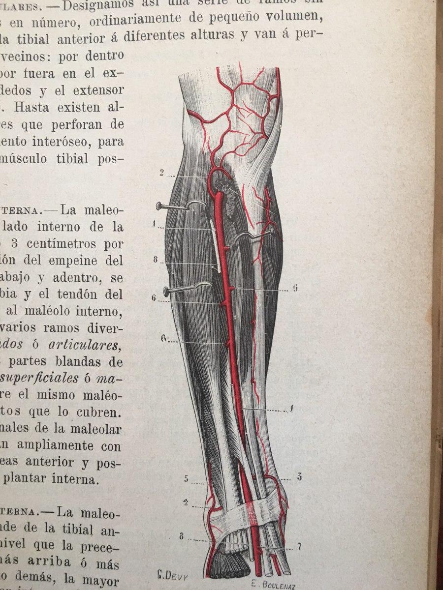 Dorable Tendones Anatomía Humana Colección - Imágenes de Anatomía ...