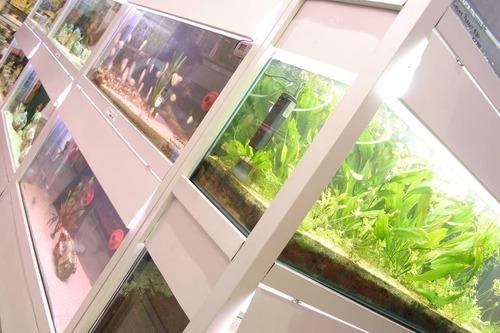 tetra pond sticks 100g (acuario leela)