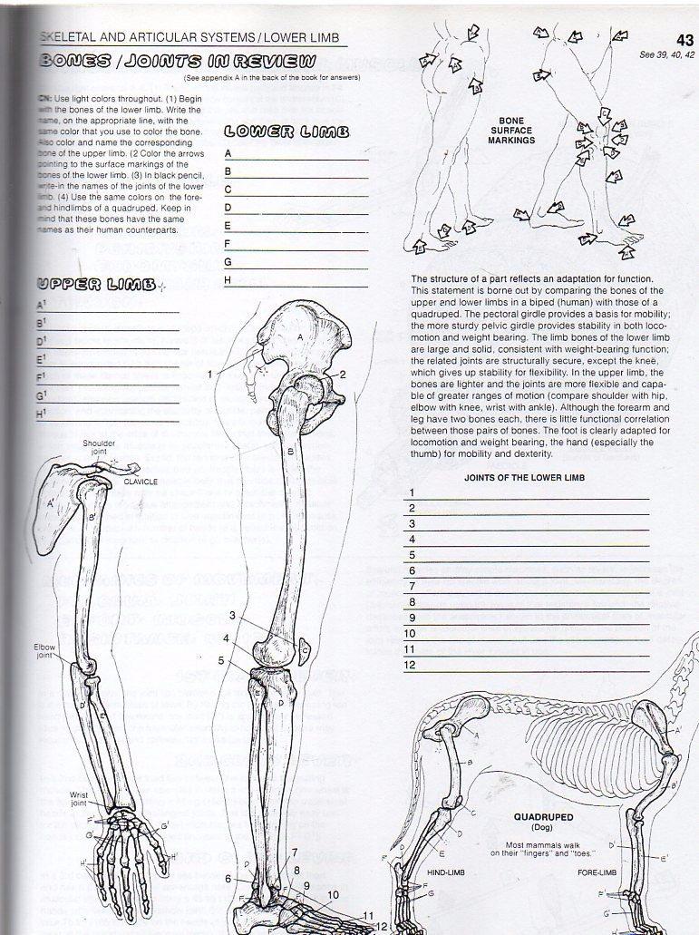 The Anatomy Coloring Book (en Inglés), De Kapit & Elson, - $ 1.200 ...