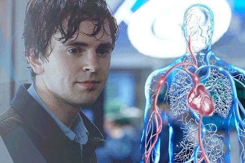 the good doctor temporada 1 español latino