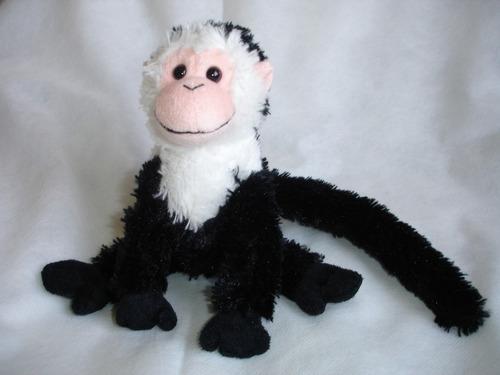 tierno mono monito