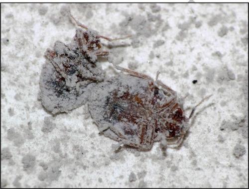 tierra diatomeas chinches cucarachas hormigas 3 sistemas