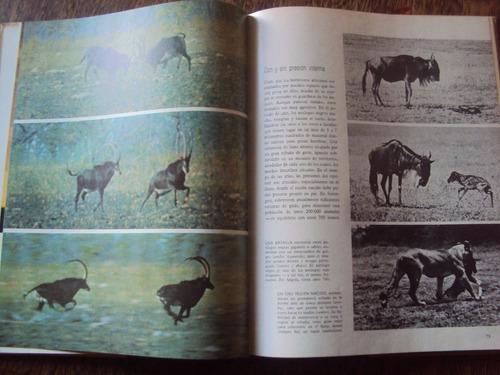 tierra fauna de africa enciclopedia naturaleza life español