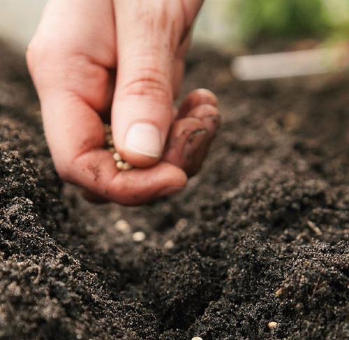 tierra negra enriquecida con nutrientes saco de 20 kg