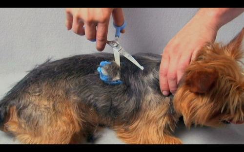 tijeras profesionales para corte mascotas scaredy cut silent