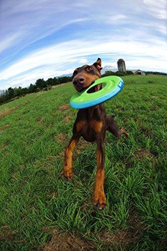 ¡tíralo! juguete de perro zurdo, medio
