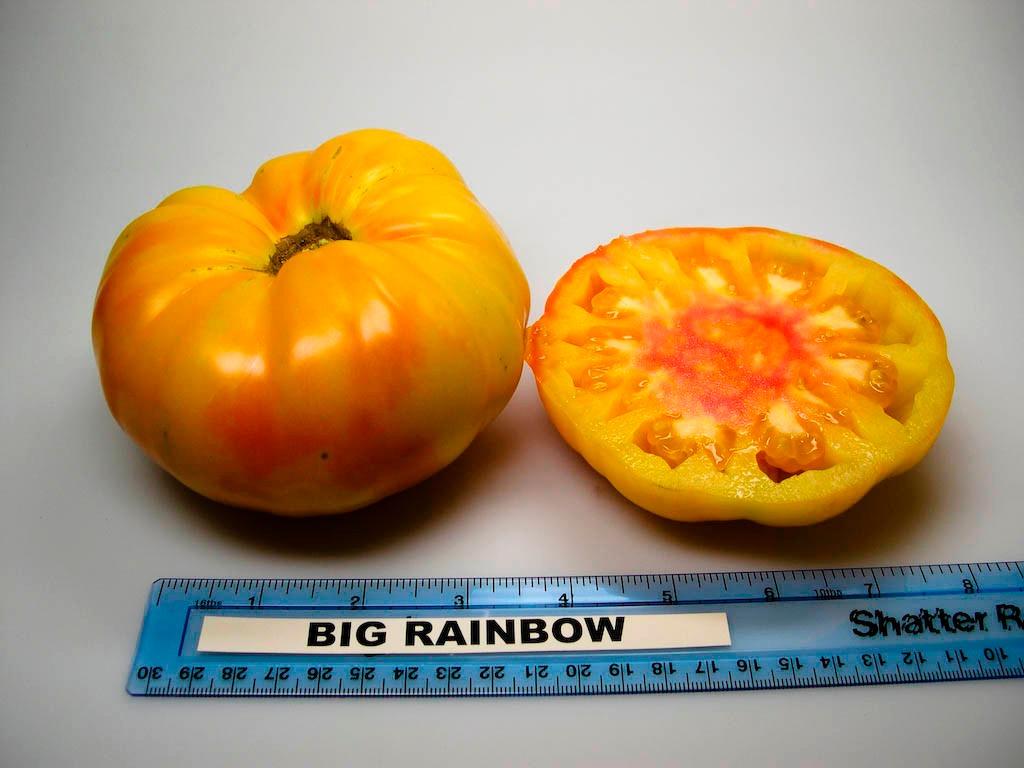 tomate big rainbow sementes crioulas para mudas brinde r 12 99 em mercado livre. Black Bedroom Furniture Sets. Home Design Ideas