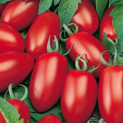 tomate italiano san marzano mini orgânico
