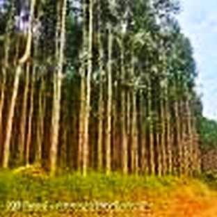 toras eucalipto p/escoras diam:6 a 10cm/div.comprimentos