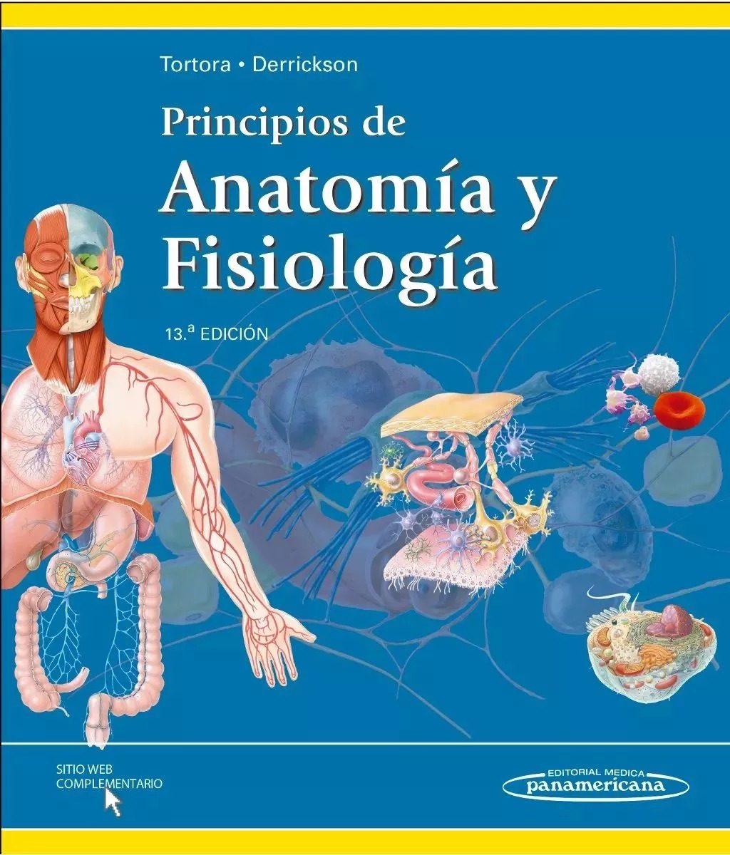 Lujo Anatomía Humana Y Fisiología Pdf Bosquejo - Imágenes de ...