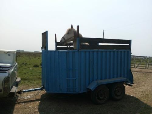 tráiler para caballos
