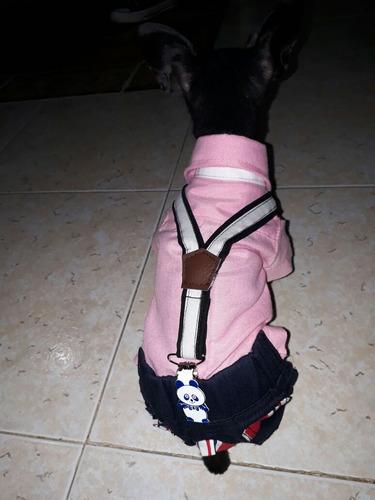 traje elegante para perro pincher