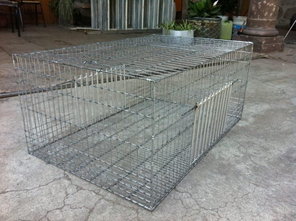 Trampa para atrapar palomas o aves multicaptura profesional en mercado libre - Trampas para ratones de campo ...
