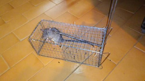 trampa para ratas combo 5 jaulas