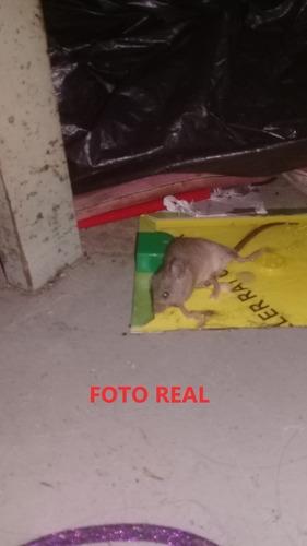trampa para ratas y ratones pegamento sin veneno adhesivas