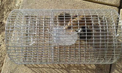 trampa para ratones / ref 109