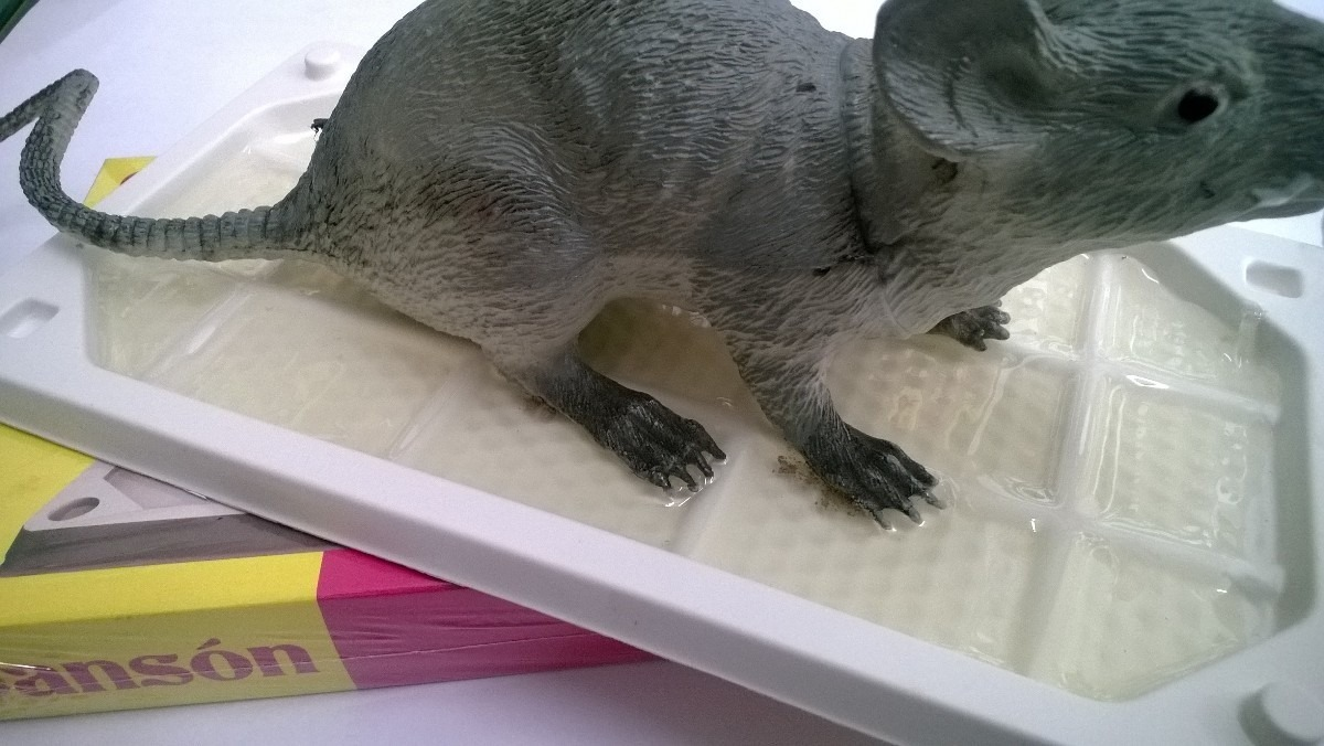 Como atrapar una rata finest raticidas with como atrapar - Productos para matar ratones ...