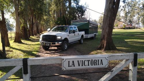 transporte de caballos a todo el pais