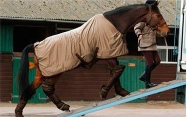 transporte de caballos, traslados de equinos,