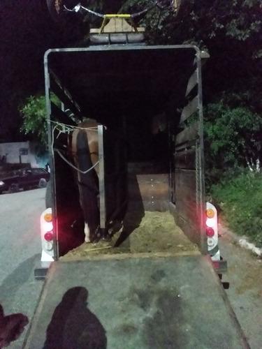 transporte de cavalos  em treiler