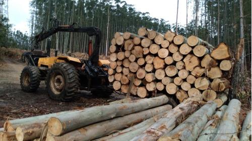 transpote de madeira