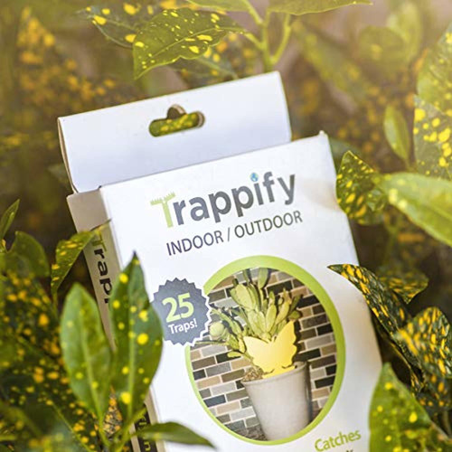 trappify sticky fruit fly and gnat trap yellow