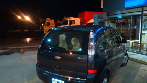 traslado de mascotas  a todo el país