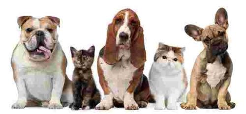 traslado de mascotas-miniflete a todo el pais economicos!!!