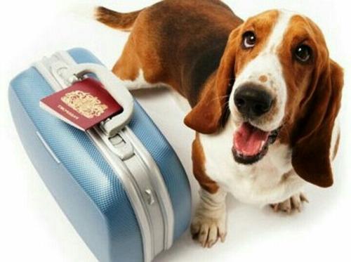 traslado de mascotas puerta a puerta con o sin acompañantes
