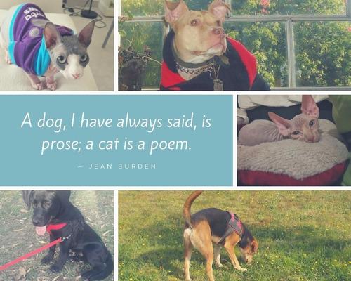 traslado :personas ,mascotas & pequeños fletes.
