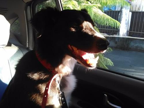 traslado viaje interior costa remis ezeiza transport mascota