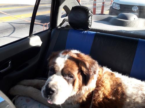 traslado viaje interior costa remis transporte mascota perro