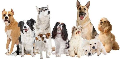 traslados de mascotas a todo el país.