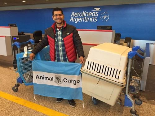 traslados de mascotas, animal cargo empresa n1 del mundo