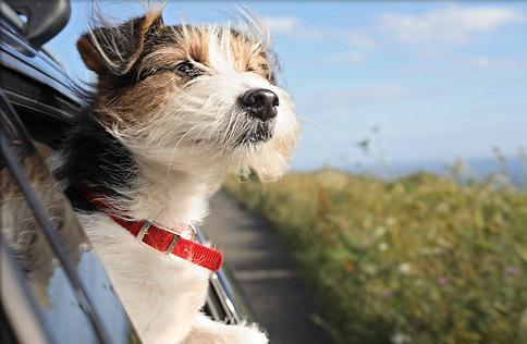traslados: la indiada  - traslados de perros