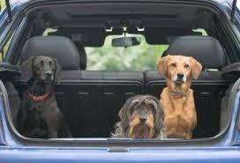 traslados mascotas personas-miniflete vamos a la costa!!