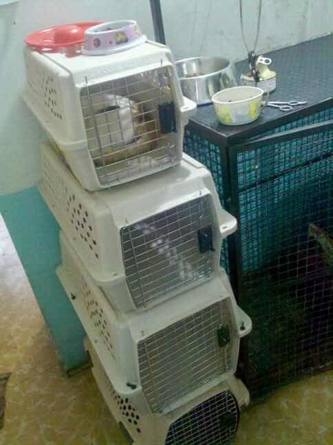traspaso veterinaria tlalnepantla