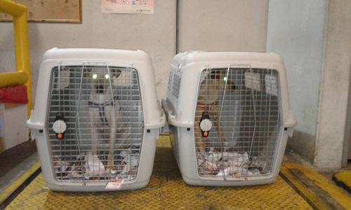 trasporte  via aerea agencia de viajes para mascotas