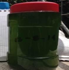 tratamiento de algas en estanques, acuarios y reservorios