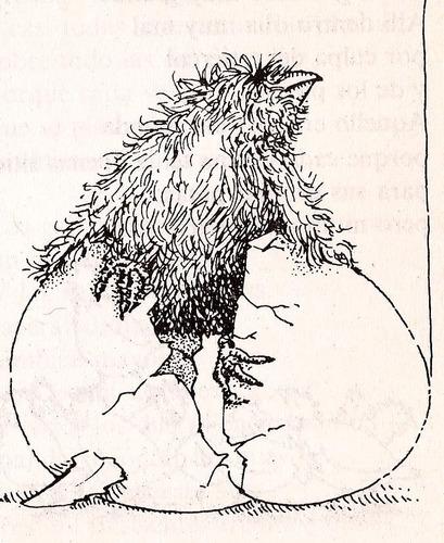 tres cuentos de pájaros .-.hanna muschg.-.ed. espasa-calpe